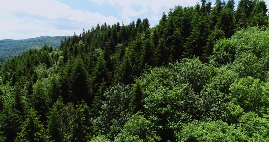 Aerial view of forest in Carpathian Mountains, Ukraine. Drone shot flying over spruce conifer treetops, nature background footage. High mountains covered with green spruce forest in the summer 4k.  | Shutterstock HD Video #1055386286