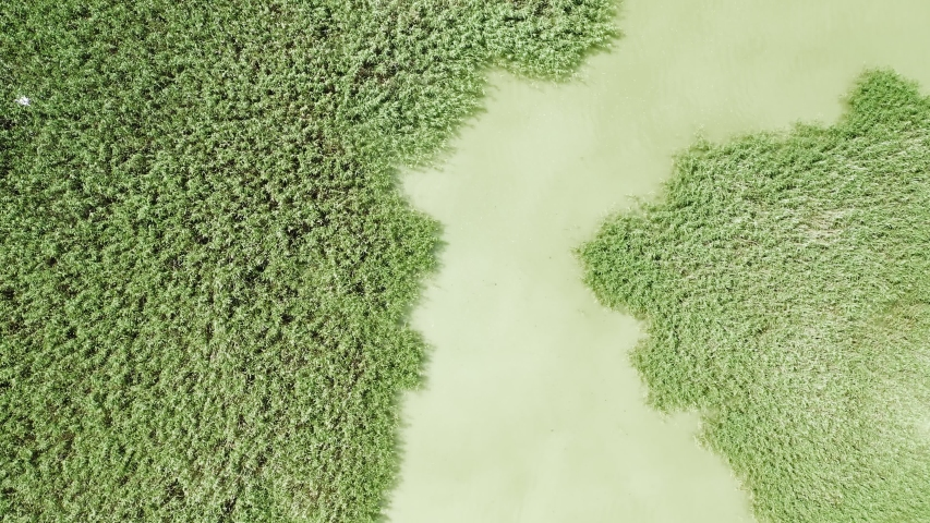 Aerial top down footage of green lake water and green plants. Koroneia lake, Greece. | Shutterstock HD Video #1055386934