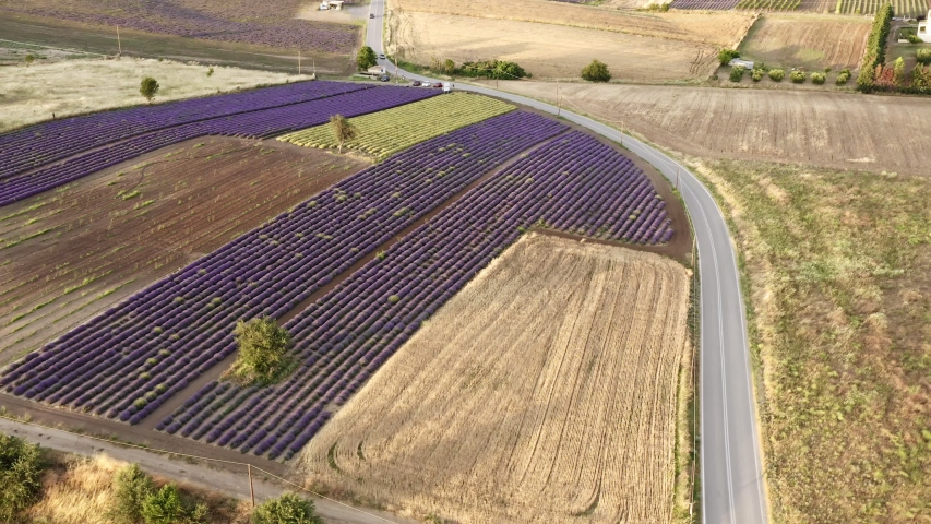 Aerial round shot of purple lavender fields in bloom. | Shutterstock HD Video #1055386943