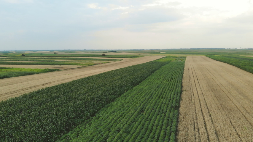 Wheat agriculture field aerial drone view  | Shutterstock HD Video #1055387069
