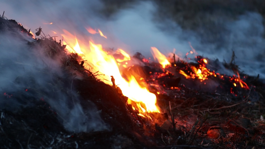 Dry grass smolders and smokes closeup. Last year's grass burning   Shutterstock HD Video #1055388002