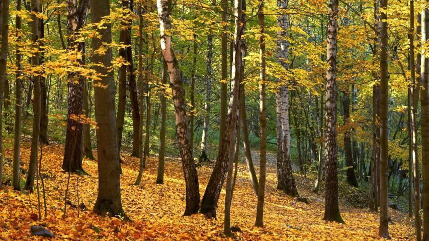 Leaf fall in the bright autumn park   Shutterstock HD Video #1055388230