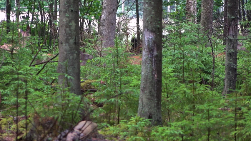 Deer run through the forest, dark trees in the foreground   Shutterstock HD Video #1055413853