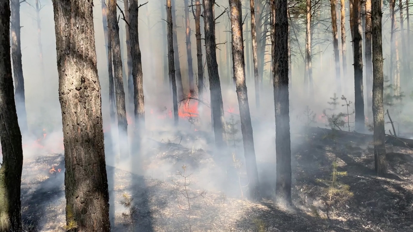 Forest fire with dense smoke destroys natural vegetation | Shutterstock HD Video #1055428001