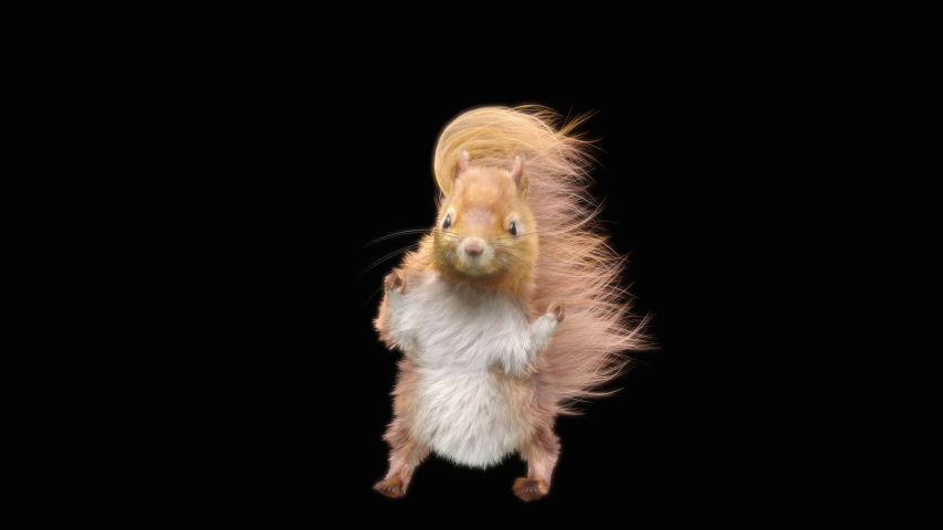 squirrel Dance CG fur. 3d rendering, animal realistic CGI VFX, Animation Loop, composition 3d mapping cartoon, Included in the end of the clip with Alpha matte.