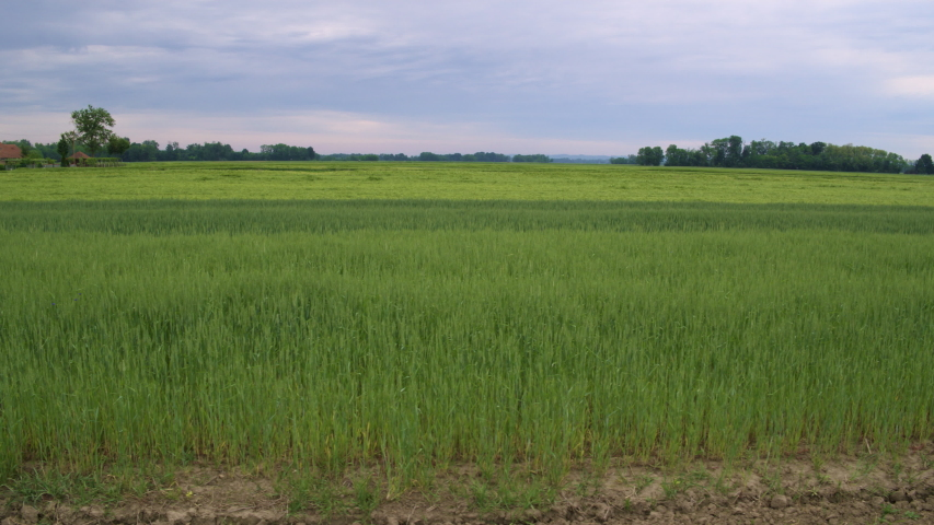 4K Slow Motion Tracking Shot Of Beautiful Green Fields | Shutterstock HD Video #1055437823