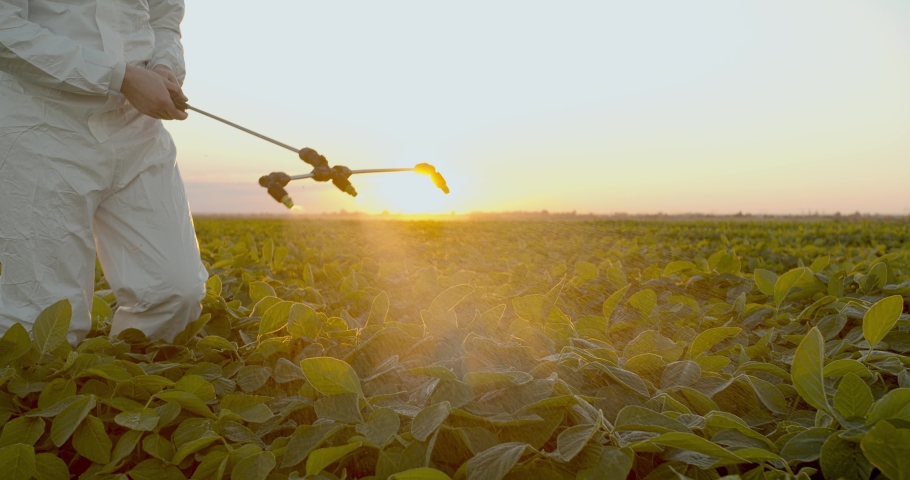 Spray ecological pesticide. Farmer fumigate in protective suit and mask Spraying Fertilizers on soybean plant field. Man spraying toxic pesticides, pesticide, insecticides Royalty-Free Stock Footage #1055469896