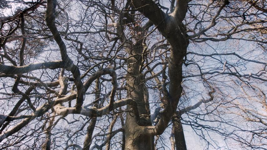 MS LA PAN Tangled bare tree branches / Kirkhaugh, Northumberland, UK | Shutterstock HD Video #1055471441