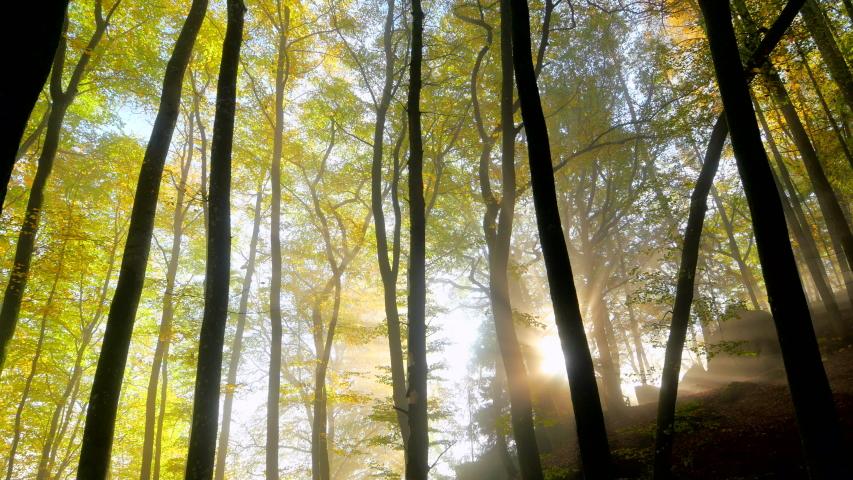 WS TD Forest in autumn / Freudenburg, Rhineland-Palatinate, Germany | Shutterstock HD Video #1055476685