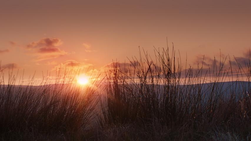 WS ZO Setting sun shining through tall grass in landscape / Kirkhaugh, Northumberland, UK | Shutterstock HD Video #1055477645