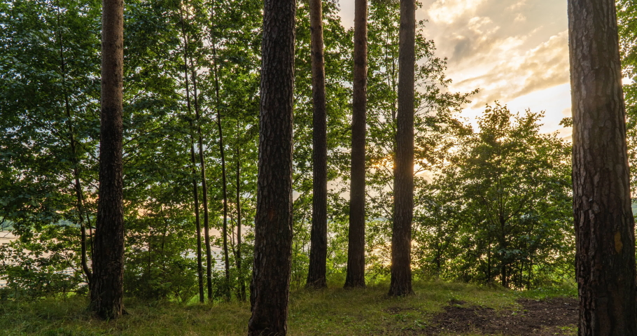 Green Forest. Pine Trees Fairy Forest. Trees pattern. Camera movement inside the forest. Wonderful green mountain forest in summer | Shutterstock HD Video #1055484851