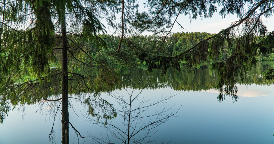 Green Forest. Pine Trees. Camera movement inside the forest. Wonderful green forest over the lake in summer. Camera movement to the right, time lapse 4k. Hyperlapse. | Shutterstock HD Video #1055484875