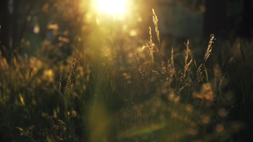 Beautiful Sunset Shining Over The Green Grass In The Meadow During Summer. -static shot | Shutterstock HD Video #1055488709