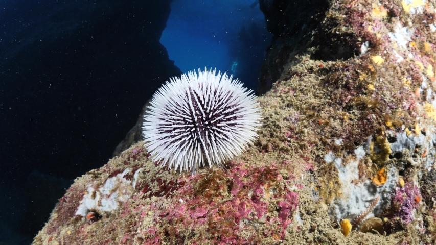 Sea urchin underwater scenery with sun light rays fish relaxing  ocean scenery seaurchin | Shutterstock HD Video #1055555273