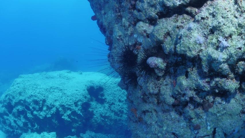 Sea urchin underwater scenery with sun light rays fish relaxing  ocean scenery seaurchin | Shutterstock HD Video #1055555276