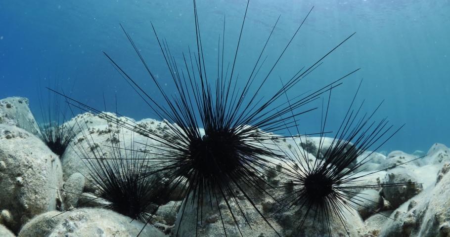 Sea urchin underwater scenery with sun light rays fish relaxing  ocean scenery seaurchin | Shutterstock HD Video #1055555279
