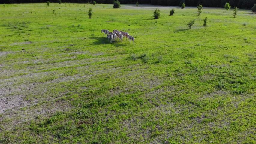 A herd of wild donkeys runs through an open meadow | Shutterstock HD Video #1055555630