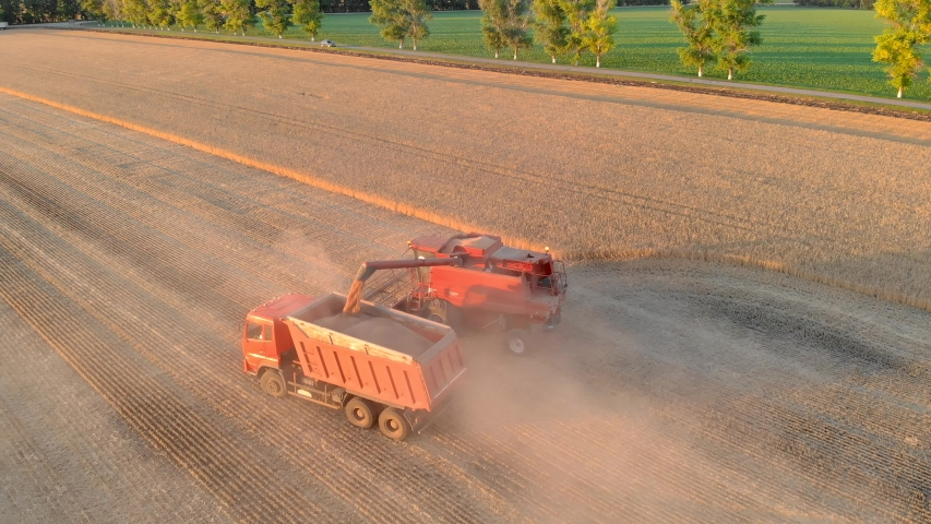 Aerial view red combine harvester pouring harvested wheat grains into hauler cargo. Combine harvester auger unloading grains of wheat. Agricultural summer work in farm machine.   Shutterstock HD Video #1055556812