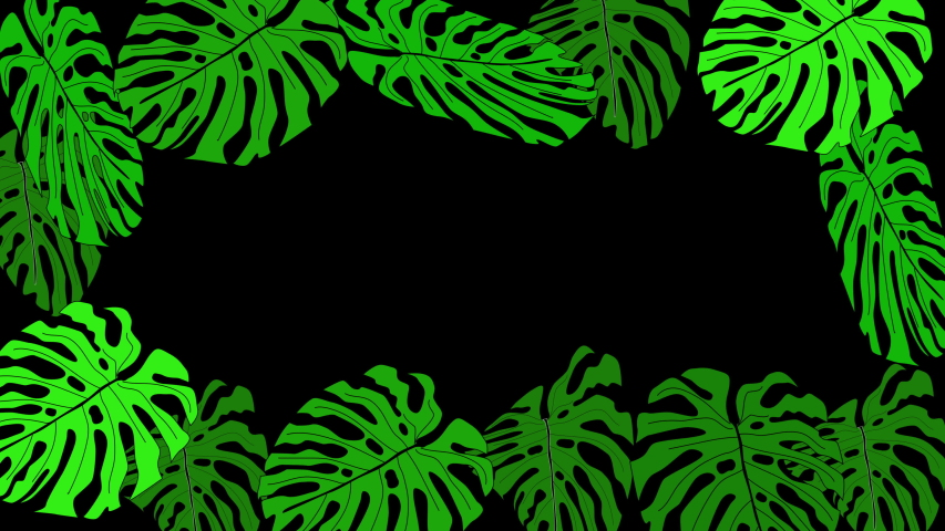Green monstera and palm leaves forming beautiful frame and colourful background. Black background. Copy space. | Shutterstock HD Video #1055569463