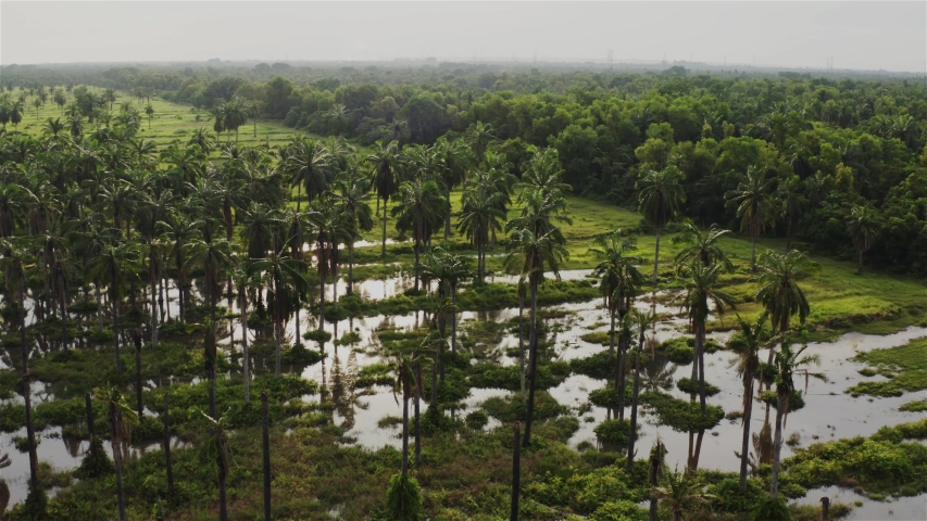 Flooded coconut plantation which became sanctuary for wildlife   Shutterstock HD Video #1055578568