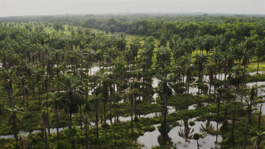 Flooded coconut plantation which became sanctuary for wildlife   Shutterstock HD Video #1055578577