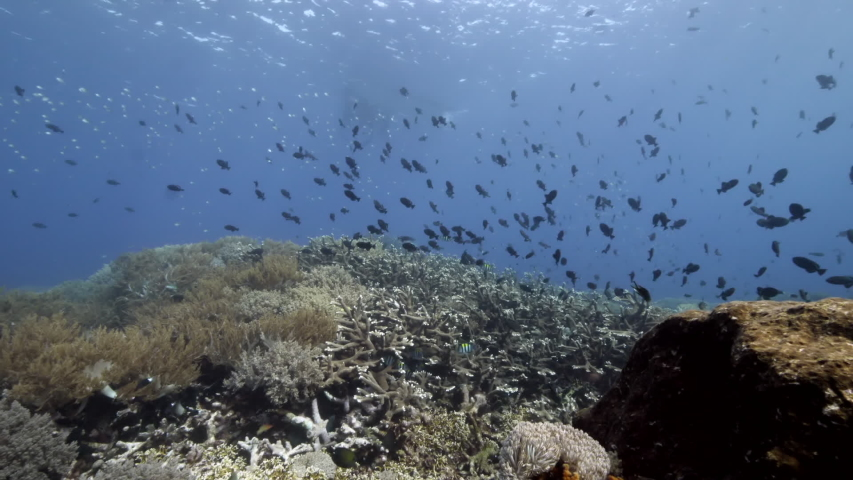 School of fish underwater in Banda Indonesia. Swimming in world colorful beautiful wildlife of reefs and algae. Inhabitants in search of food. Slow motion shots. | Shutterstock HD Video #1055611625