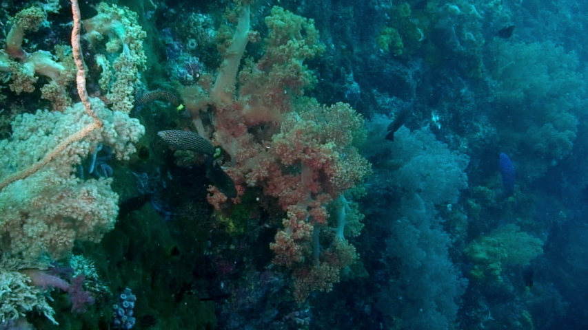 Soft coral on background sea bottom underwater in Red Sea. Swimming in world of colorful beautiful wildlife of corals reefs. Inhabitants in search of food. Abyssal relax diving. | Shutterstock HD Video #1055614673