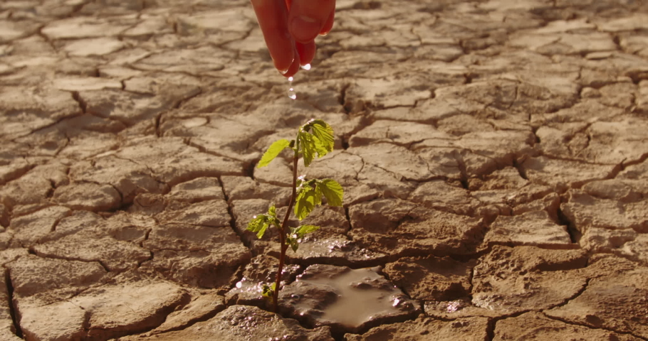 Close up shot of hand watering a lttle sprout on deserted ground. Cracked dead soil in dried lake or river - ecological disaster, save our planet 4k footage | Shutterstock HD Video #1055626319