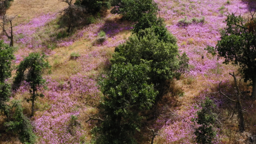 Bird Eye View Contrast of Pink Wildflowres and Green Grass National Forest | Shutterstock HD Video #1055681408