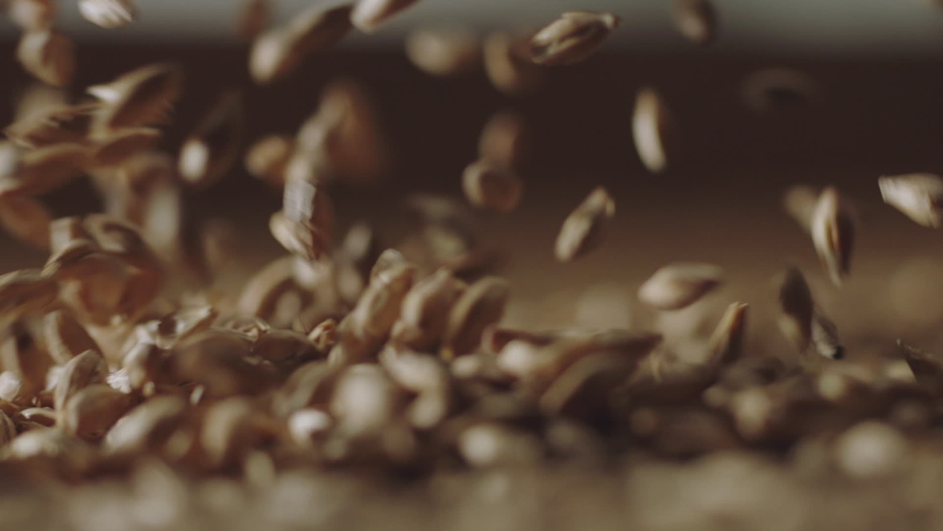 Slow motion shot of malted barley flying in shallow depth of field, shot on Alexa in high frame rate.   Shutterstock HD Video #1055684843