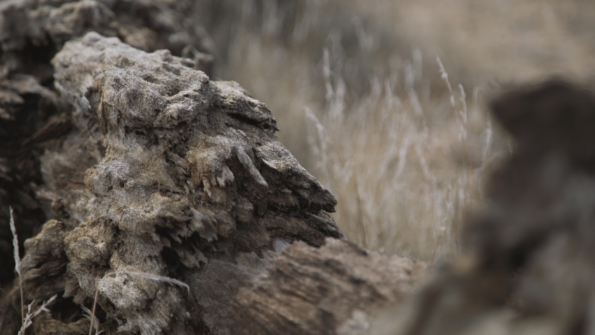 Fallen tree in desert exposed to elements | Shutterstock HD Video #1055710040