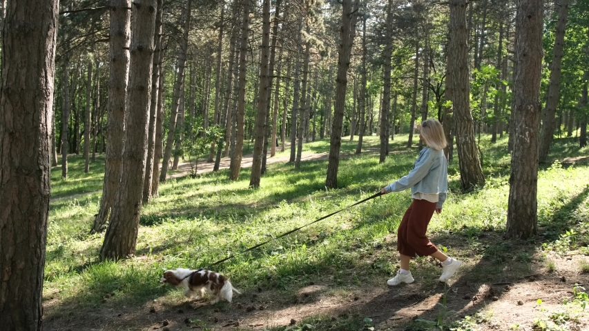 Young blonde haired woman walks with cavalier king charles dog in park, holds leash, passes near large tree . A bright sunny day. The concept of friendship, care, human and animal Help | Shutterstock HD Video #1055900609