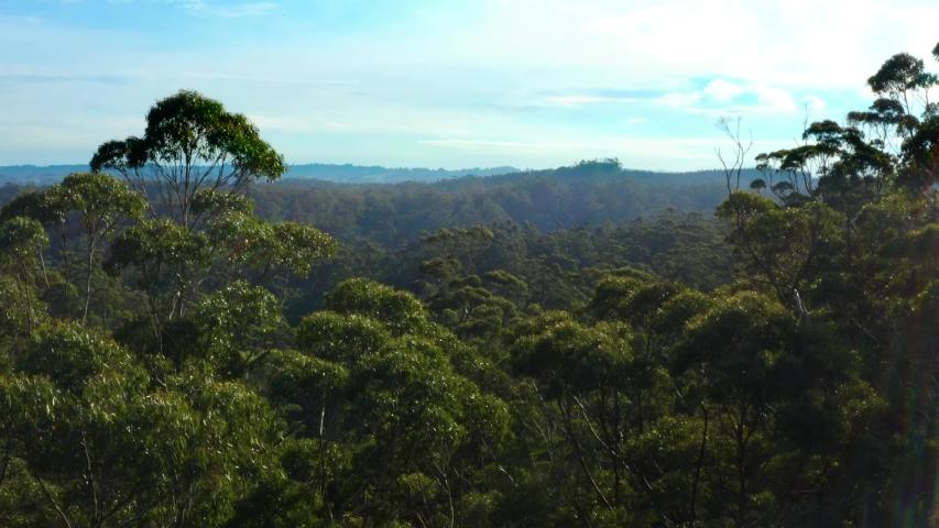 Australian Bushland. Gum trees bushfire prone area | Shutterstock HD Video #1055911373