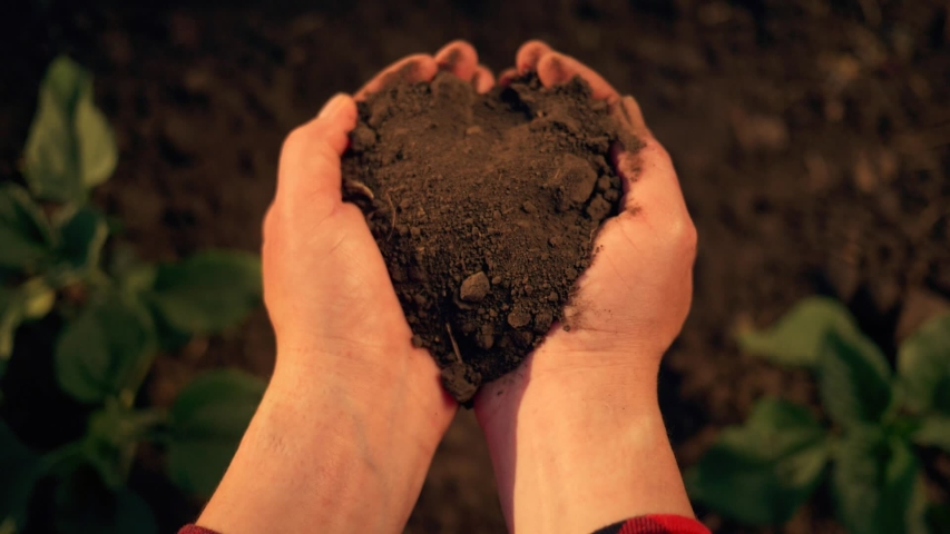 Agriculture. Farmer hand with fertile soil. Agriculture concept. Farmer hand with fertile black soil. Green plants. Farmer in green field holds fertile black soil in his hand. Farmer and agriculture