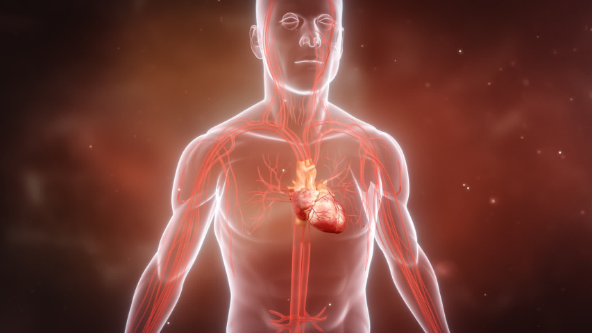 Heart 3D animation with background.