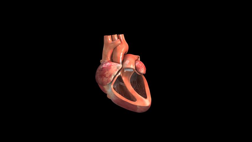 Heart beat blood-Alpha Original animation, heart beat with blood.