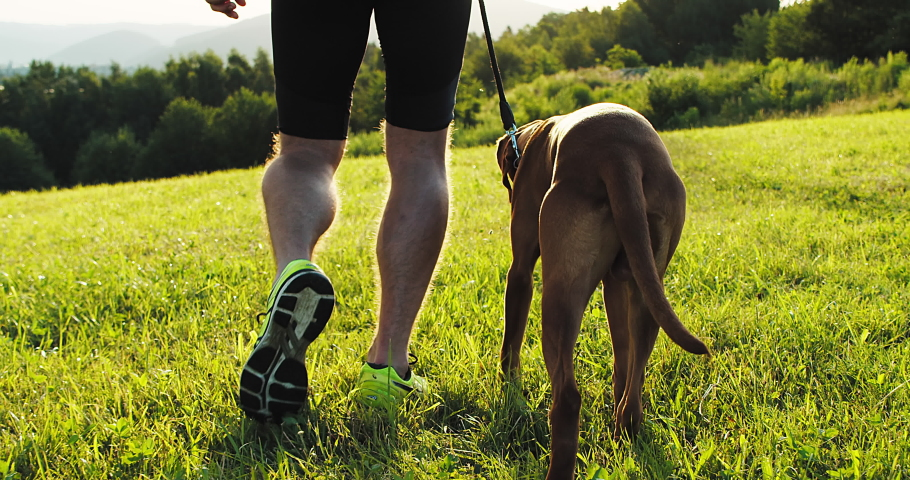 Silhouettes of runner and dog on field under golden sunset sky in evening time. Outdoor running. Athletic young man with his dog are running in nature. 4K video Royalty-Free Stock Footage #1056044960