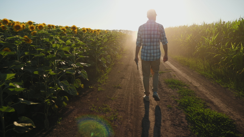 Farmer man with digital tablet in hand walks along a dirt road between agricultural fields of sunflower and corn at sunset, slow motion. Harvest inspection | Shutterstock HD Video #1056053285