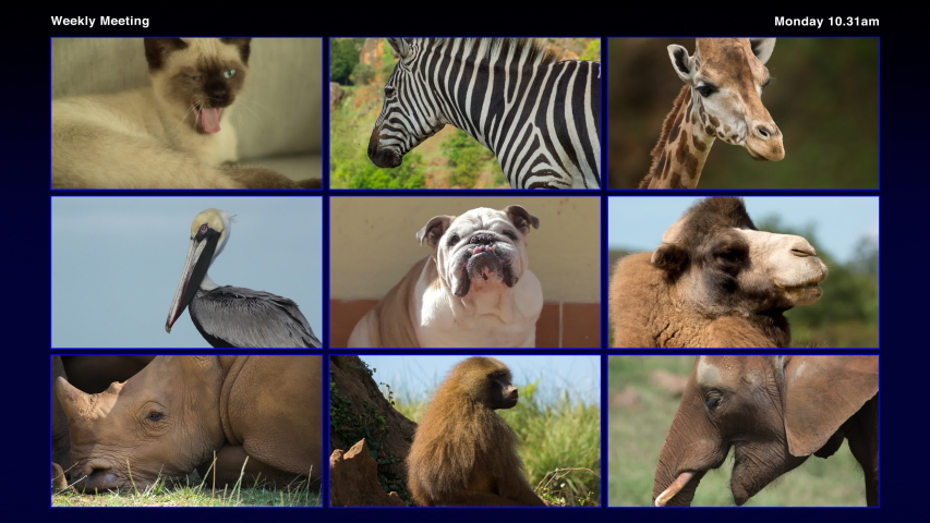 Footage of a group of different animals in online virtual remote business meeting | Shutterstock HD Video #1056064520