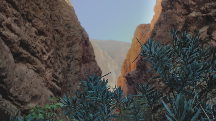 Panorama Todgha Gorge, green plant in the foreground in the shade, a canyon in the High Atlas Mountains in Morocco, 4k