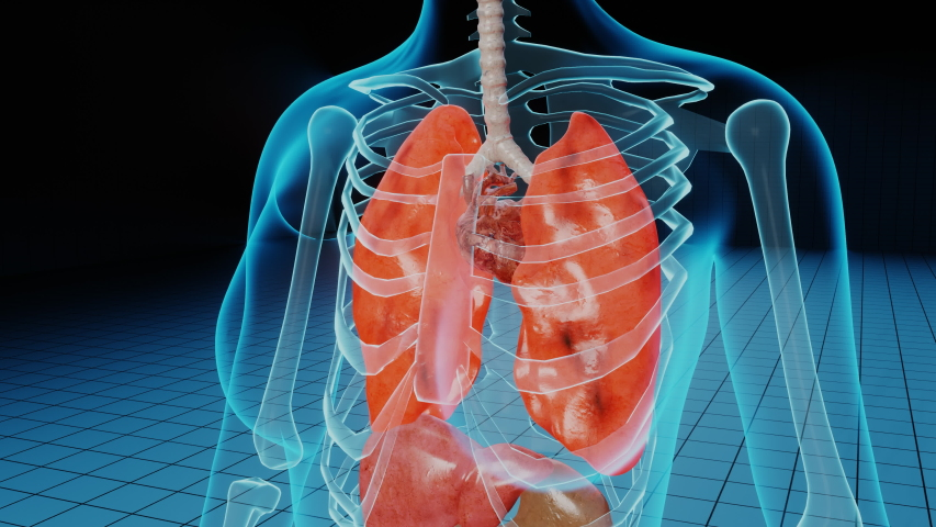 Damaged ill lungs in red. 3D render animation of breathing problems, cancer medical or health problems. Disease in human body, respiratory problems, tumor and clinic case Royalty-Free Stock Footage #1056119792