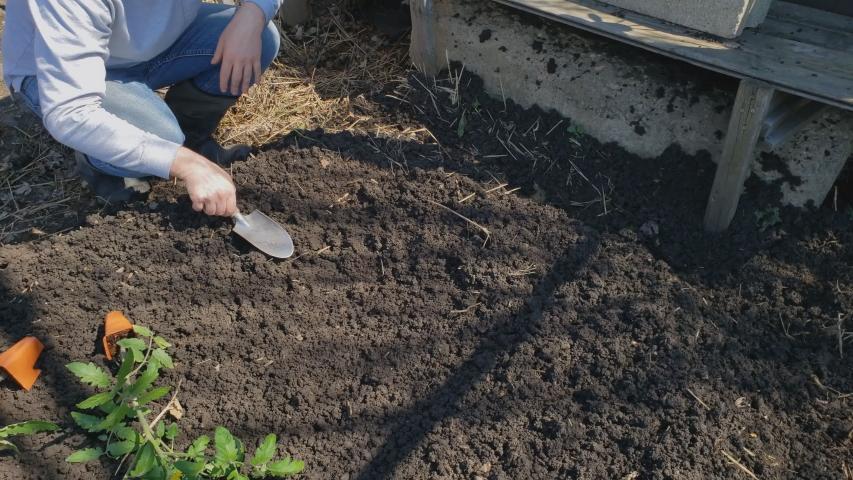 Home gardening - Tomato transplant being planted in freshly prepared garden bed soil in back yard garden. | Shutterstock HD Video #1056131048