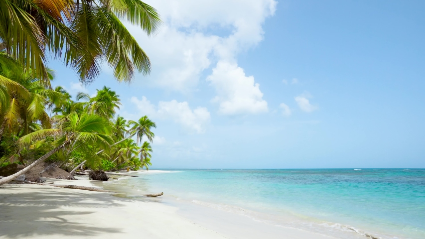 Wild tropical palms island beach. Pristine   coral sand palm trees beach and crystal clean turquoise seawater. Summer on paradise sunny sea beach landscape.