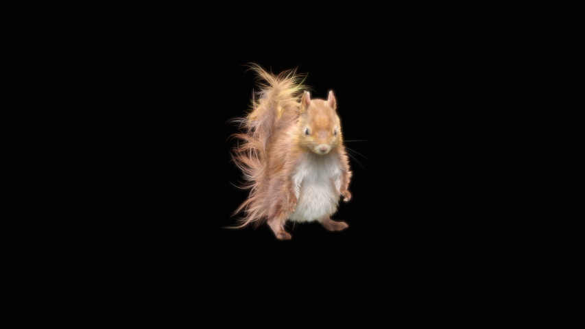 Squirrel Dance CG fur, 3d rendering, animal realistic CGI VFX, composition 3d mapping, cartoon, Included in the end of the clip with Alpha matte.