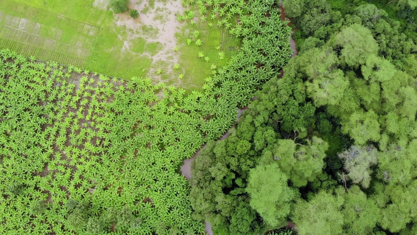 Aerial Flyby view on banana plantation bordered with a Primal Virgin Forest of Manyara National Park Concervation Area in East Africa, Tanzania