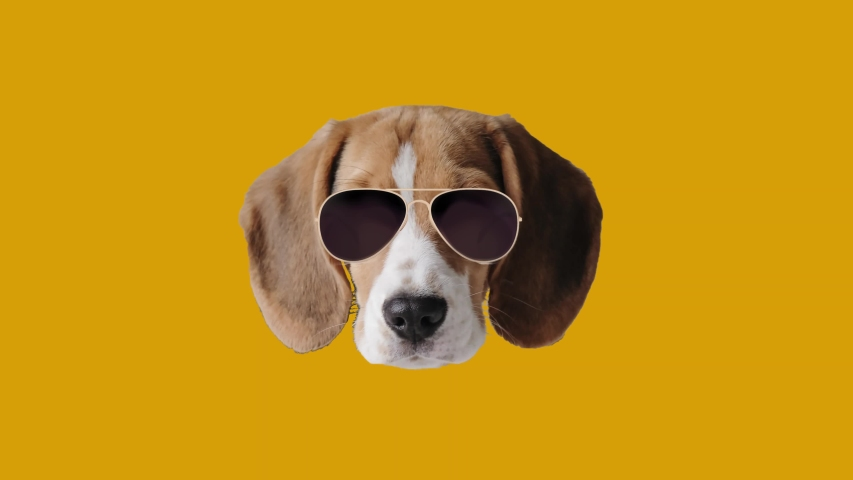 Contemporary minimal motion art. Dog beagle in glasses wiggle in circle animation