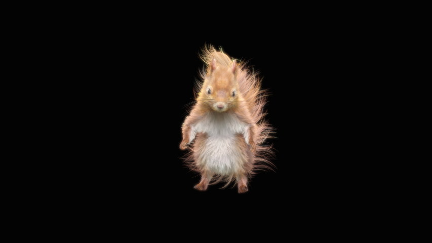 Squirrel Dance CG fur, 3d rendering, animal realistic CGI VFX, composition 3d mapping, cartoon, Included in the end of the clip with Luma matte.