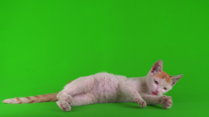White-red cat kitten plays on a green background screen. | Shutterstock HD Video #1056417077