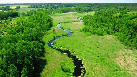 Spring green forest and small river in spring, Poland