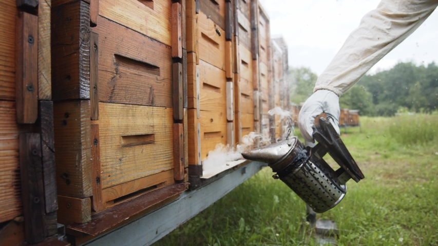 Close-up professional beekeeper using smoke tool for bees fumigation. Honey bees houses. Natural garden. Apiculture farming. Royalty-Free Stock Footage #1056485666